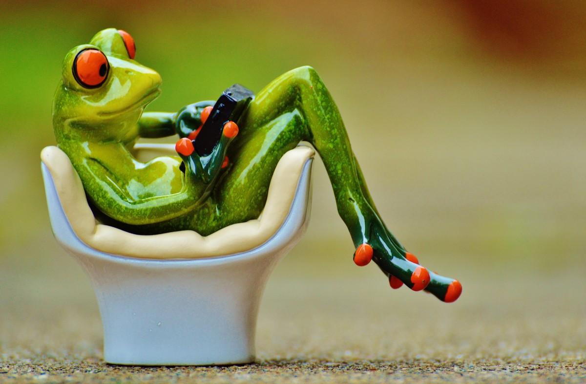 Картинка крутая лягушка
