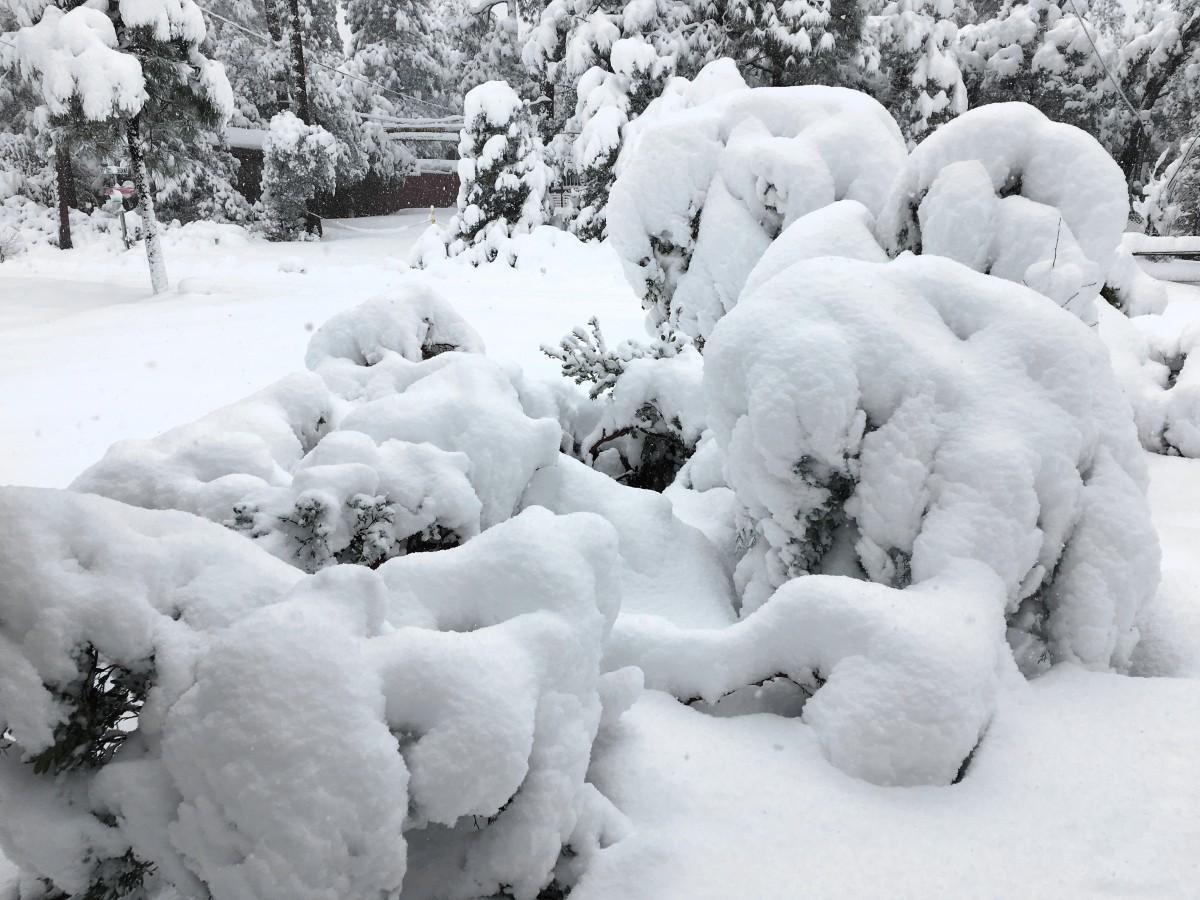 история виды снега картинки ранних