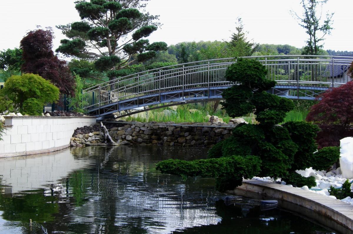 Images gratuites arbre fleur tang piscine parc for Piscine miroir cout