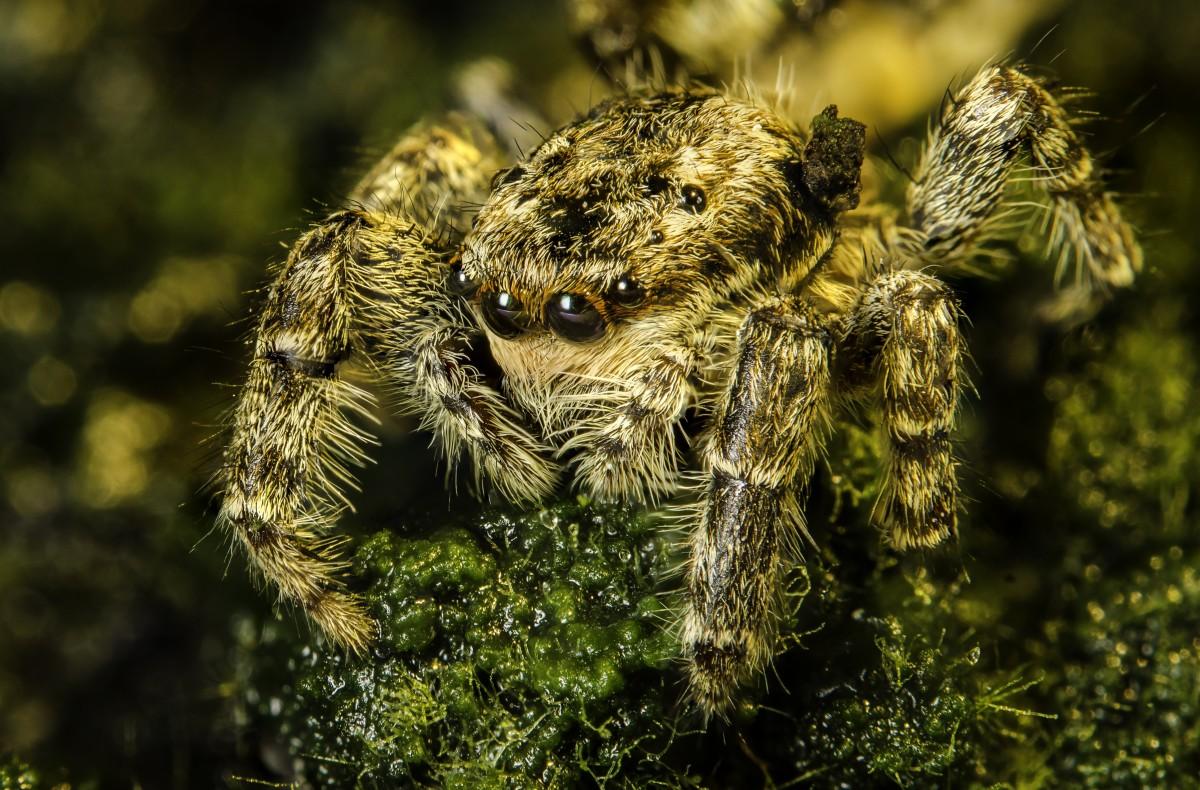 фото паука в высоком разрешении автомобиль харизмой
