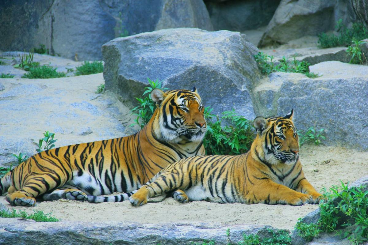 Images gratuites des loisirs faune sauvage zoo - Images d animaux sauvages gratuites ...