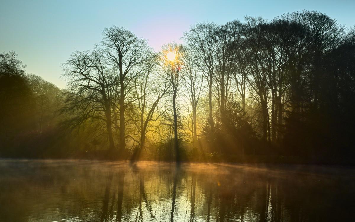 sun fog sunrise trees - photo #22