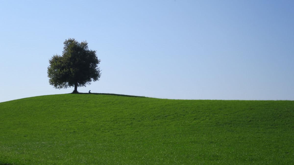 картинки дерево на холме рецепт