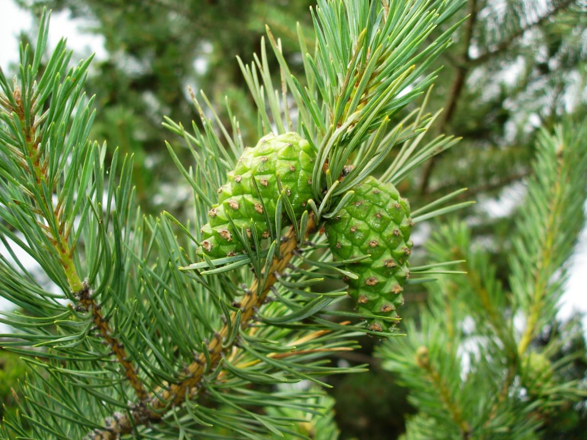 Images gratuites arbre branche plante feuilles for Plante ligneuse