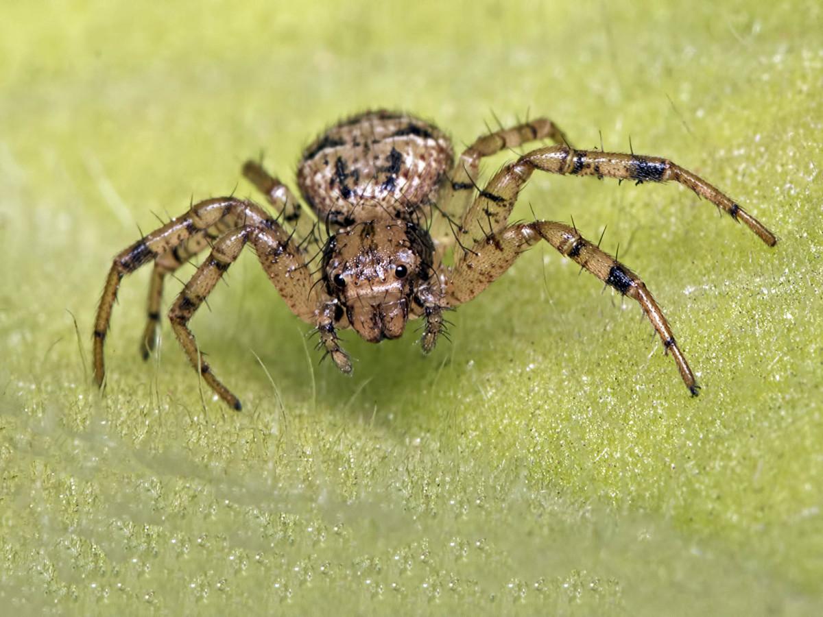 Free Images : fauna, invertebrate, close up, arachnid ...