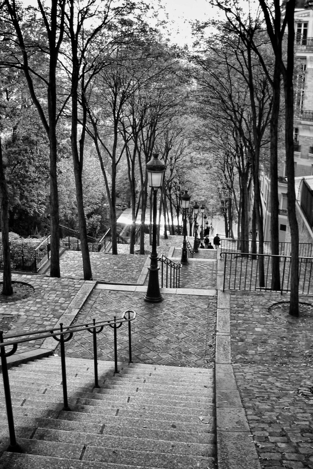 árbol invierno en blanco y negro arquitectura la carretera calle fotografía colina ciudad París urbano turista viajar Francia Europa punto de referencia monocromo temporada escalera infraestructura famoso Montmartre área urbana Fotografía monocroma Asentamiento humano Planta leñosa
