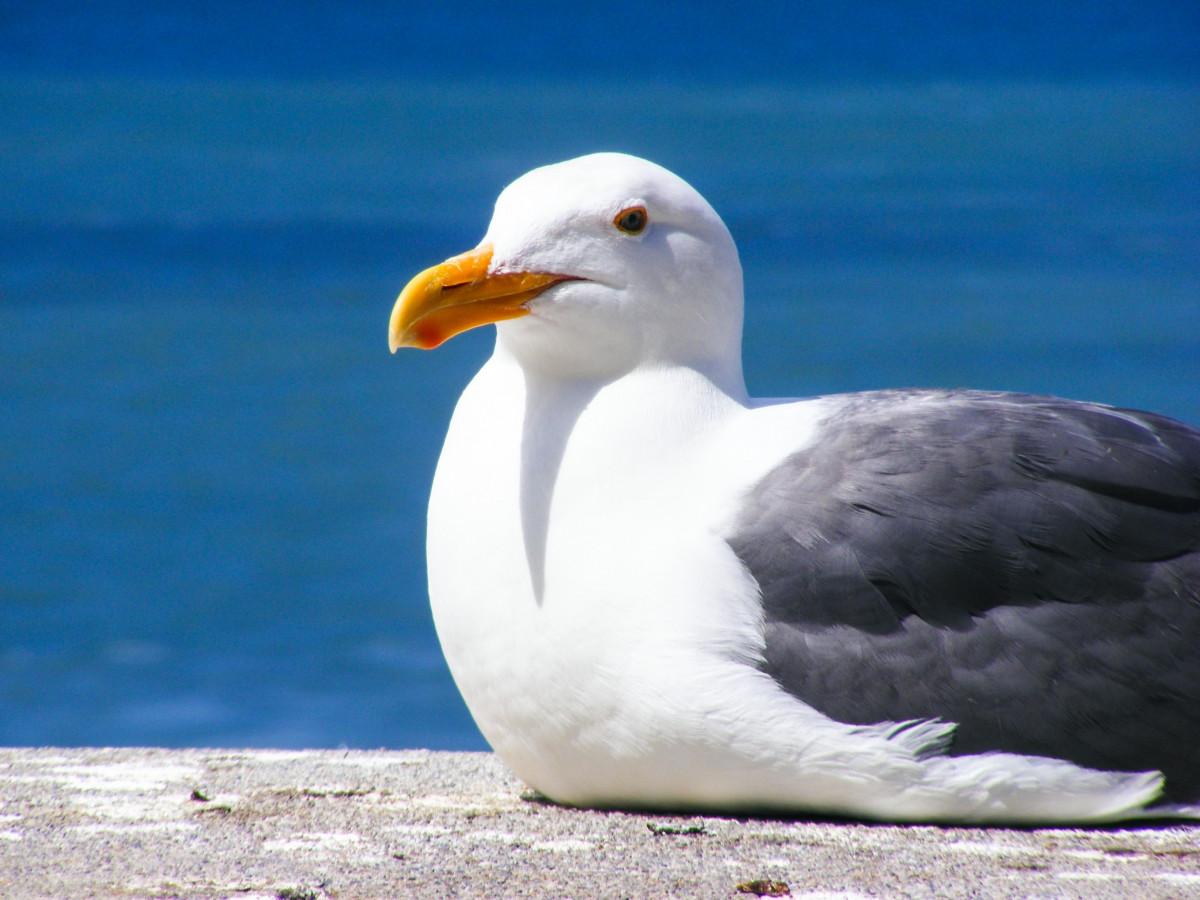 хозяюшкам картинки как выглядит чайка вот самое