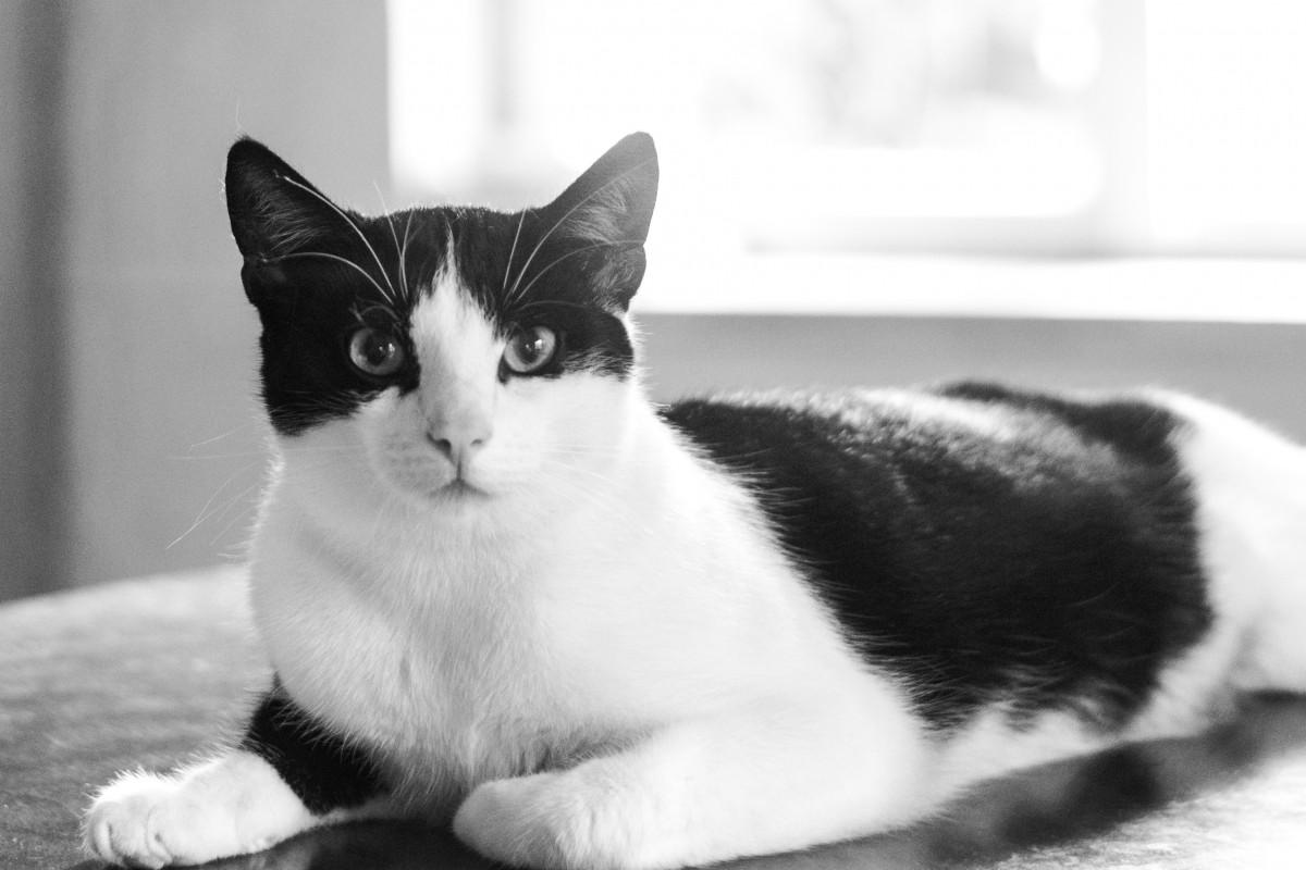 Black and white coat cat
