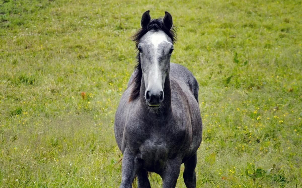 grass meadow summer pasture grazing horse mammal stallion mane fauna free grey animals vertebrate mare foal colt summer meadow hage horse like mammal mustang horse riding horse