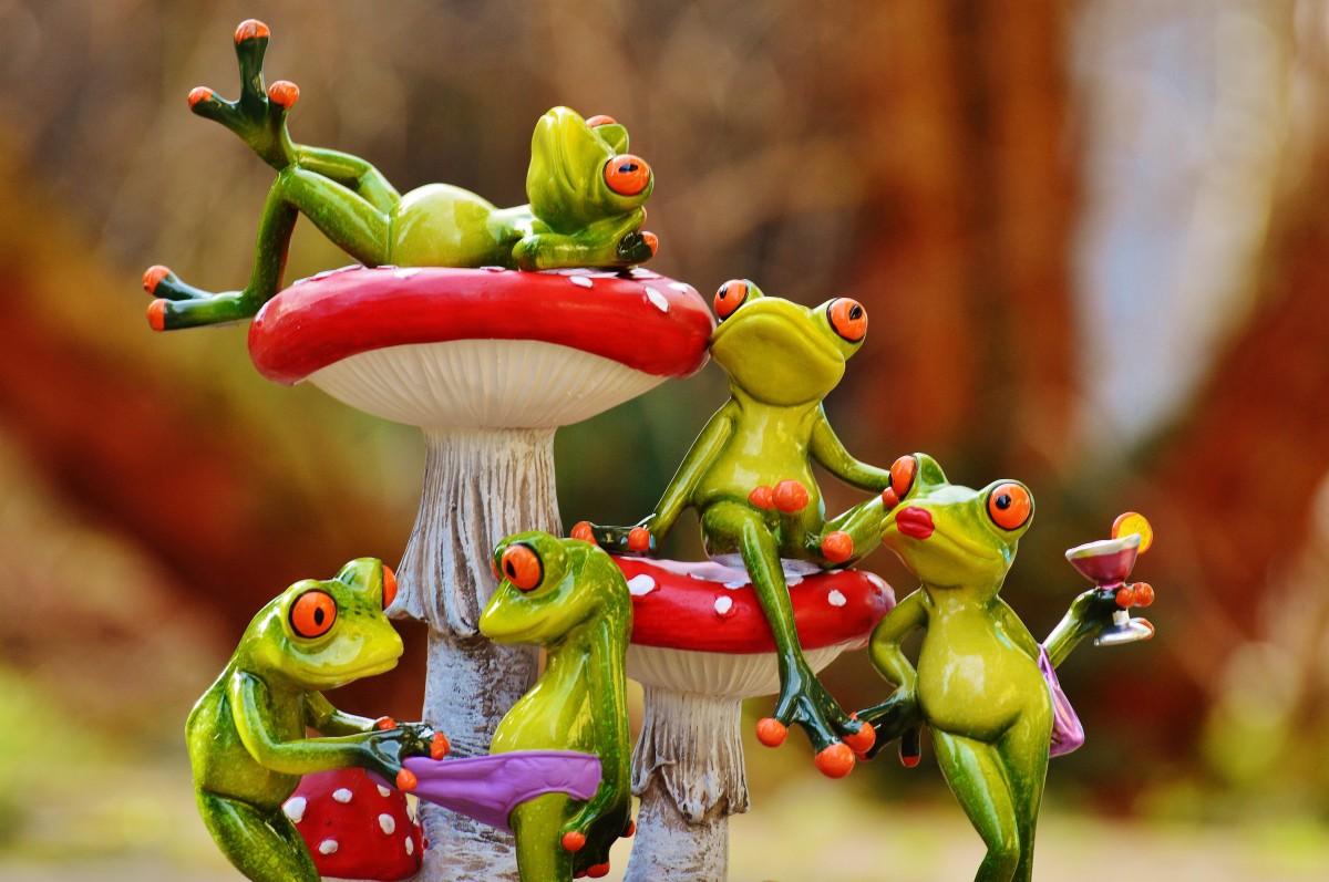 kelompok menanam manis bunga imut cinta makanan hijau merah menghasilkan warna amfibi bersama mainan Flora senang hubungan jamur hewan terbang agaric lucu angka-angka keberuntungan kebersamaan katak fotografi makro rasa tanaman berbunga iri iri tanaman tanah