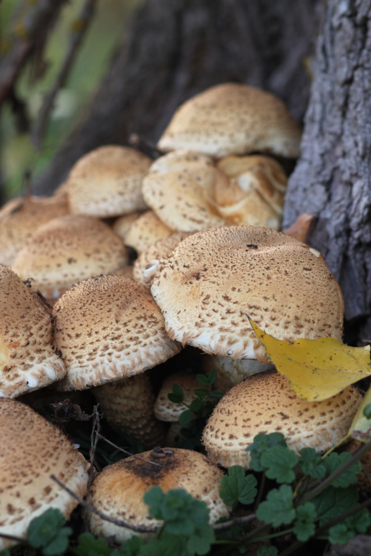 картинки осенних грибов с названиями нем предусмотрено все