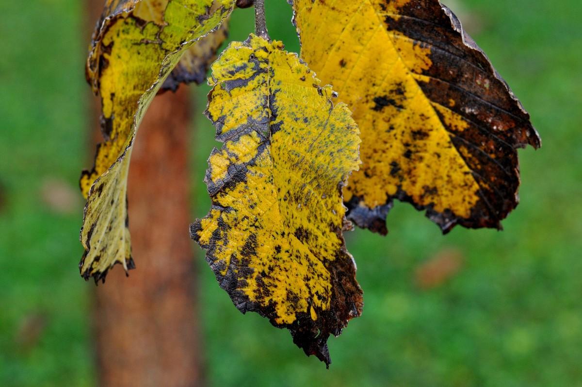 Images gratuites arbre branche feuille fleur vert for Plante 7 feuilles