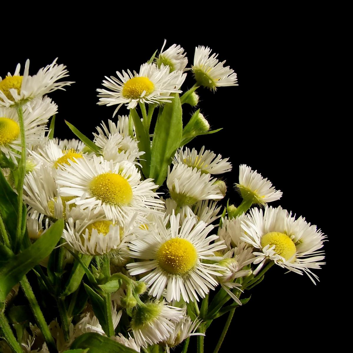Images Gratuites La Nature Branche Fleur Bois Blanc Petale