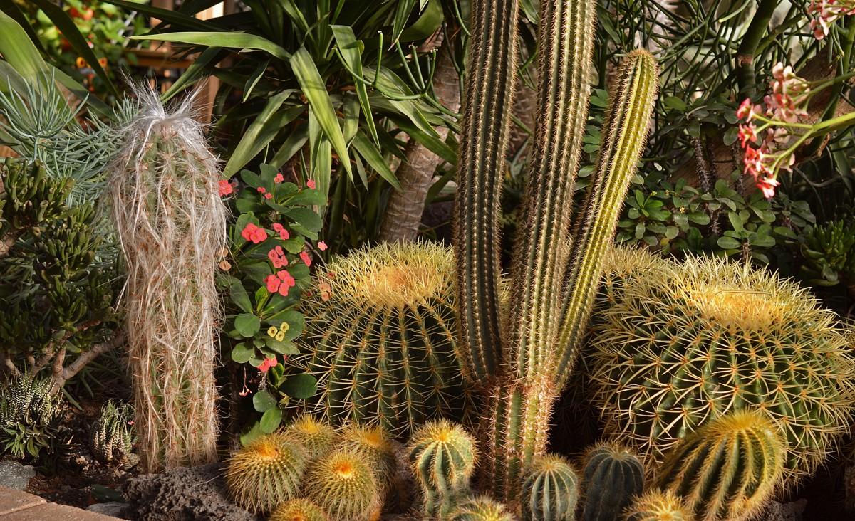 Free Images Cactus Flower Floral Natural Botany