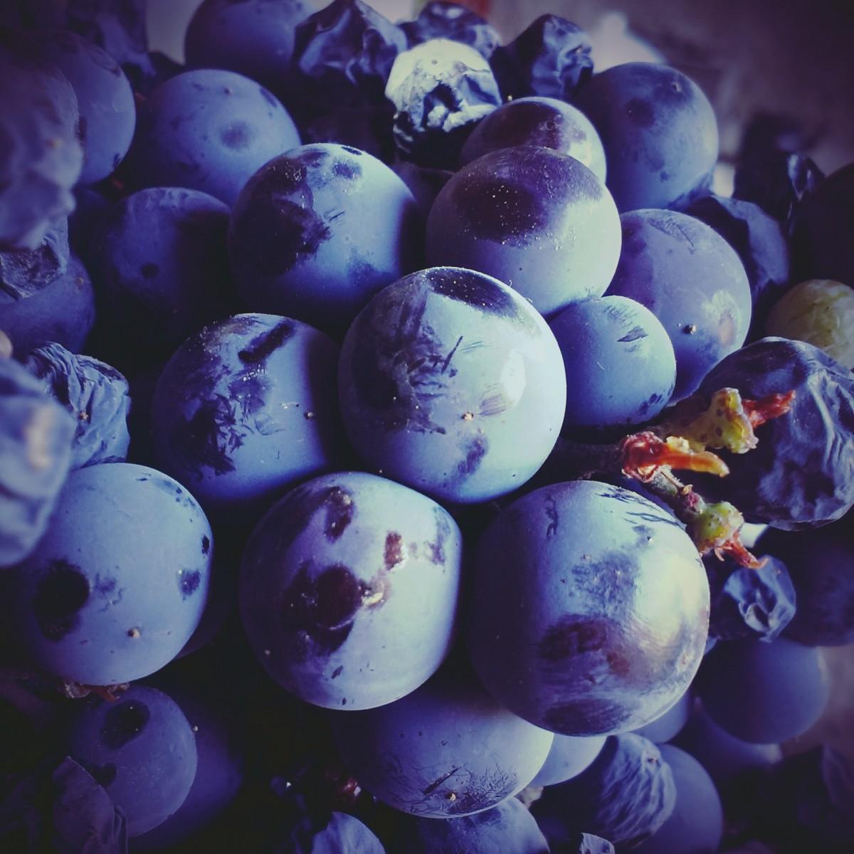 цвет лиловый картинки фрукты вестибюле нишах