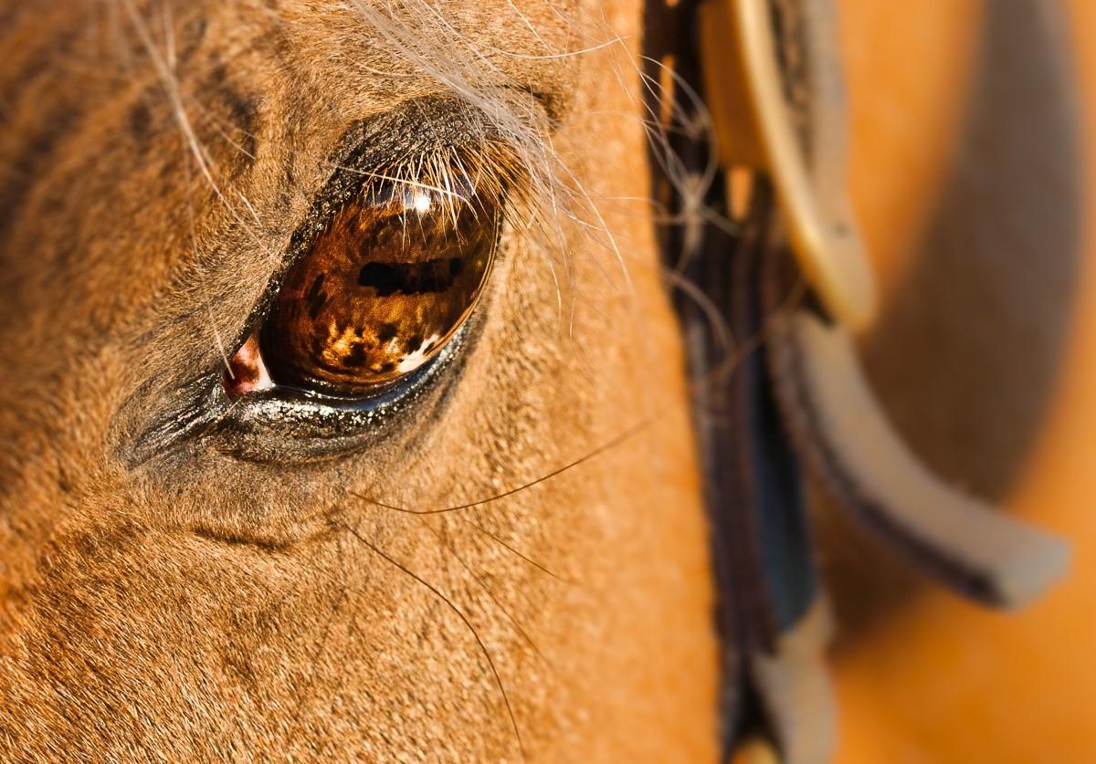 Free Images Nature Mammal Mane Lion Close Up Nose - 24 detailed close ups of animal eyes