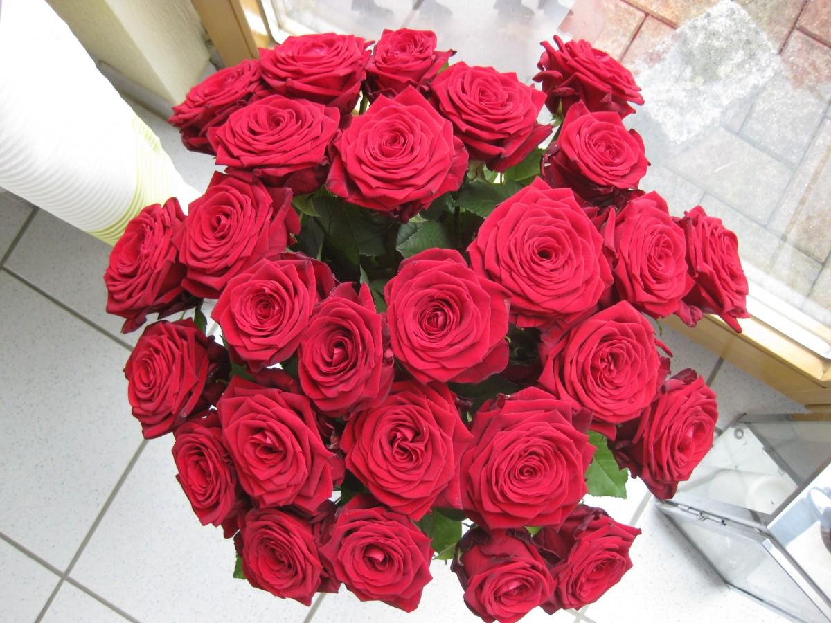 Миллион алых роз: девушки, достойные прекрасных цветов - Wday