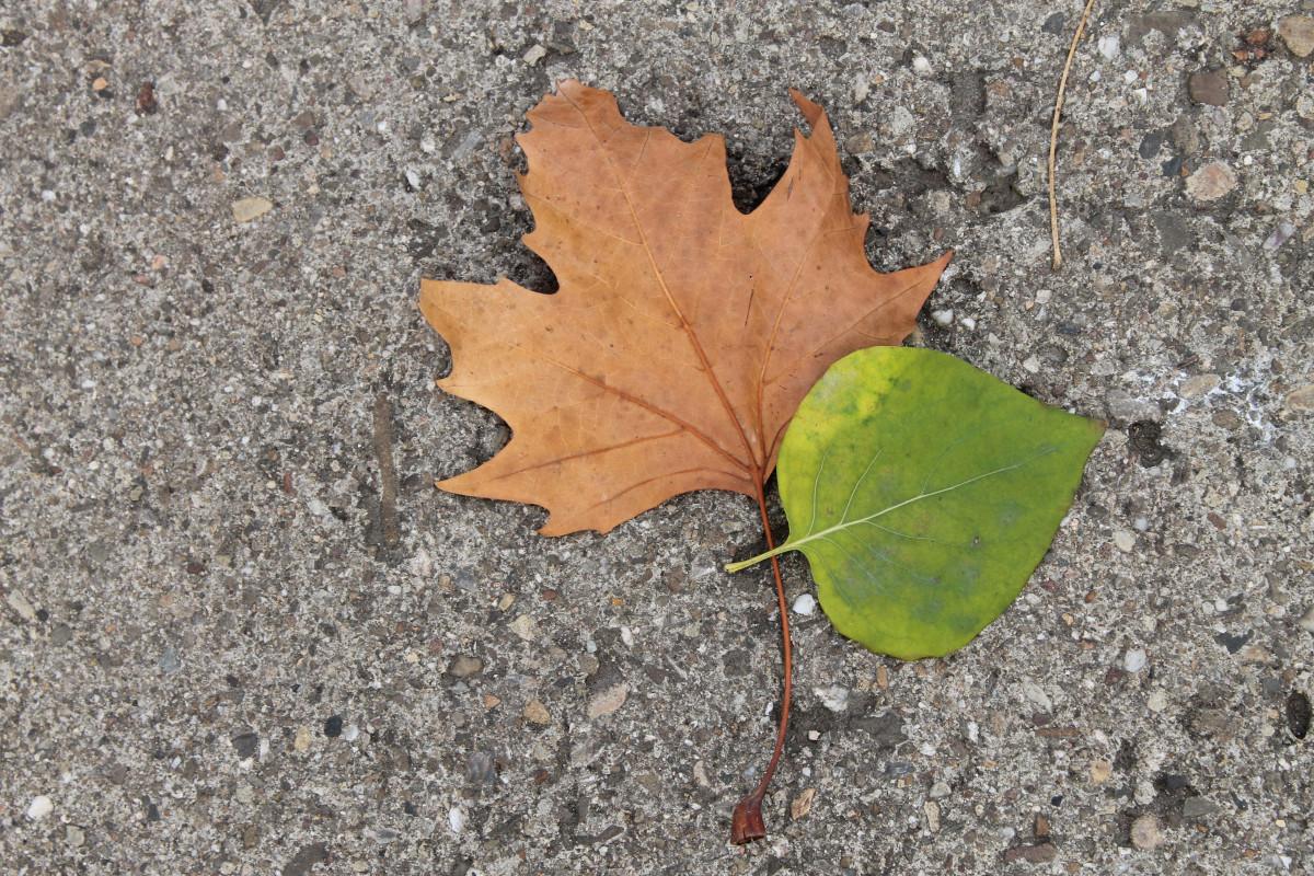 Kostenlose foto baum natur ast wei blume sommer lebensmittel fr hling gr n - Garten baum fallen ...