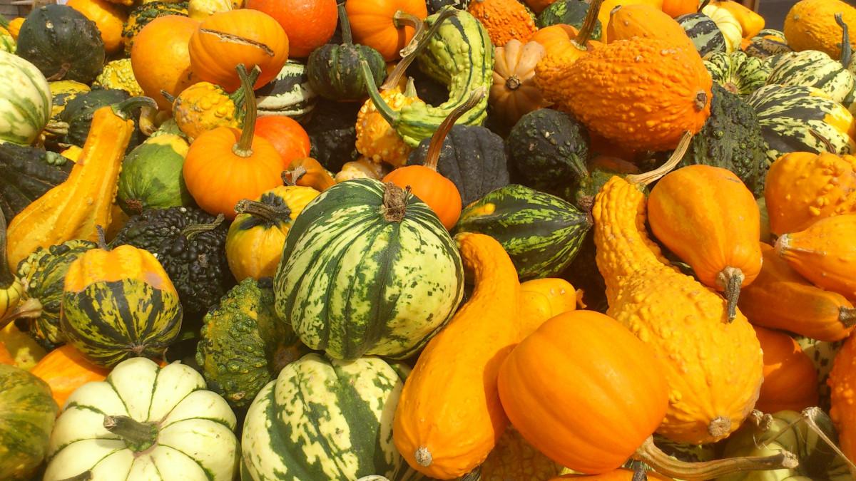 Free images fruit orange food harvest produce