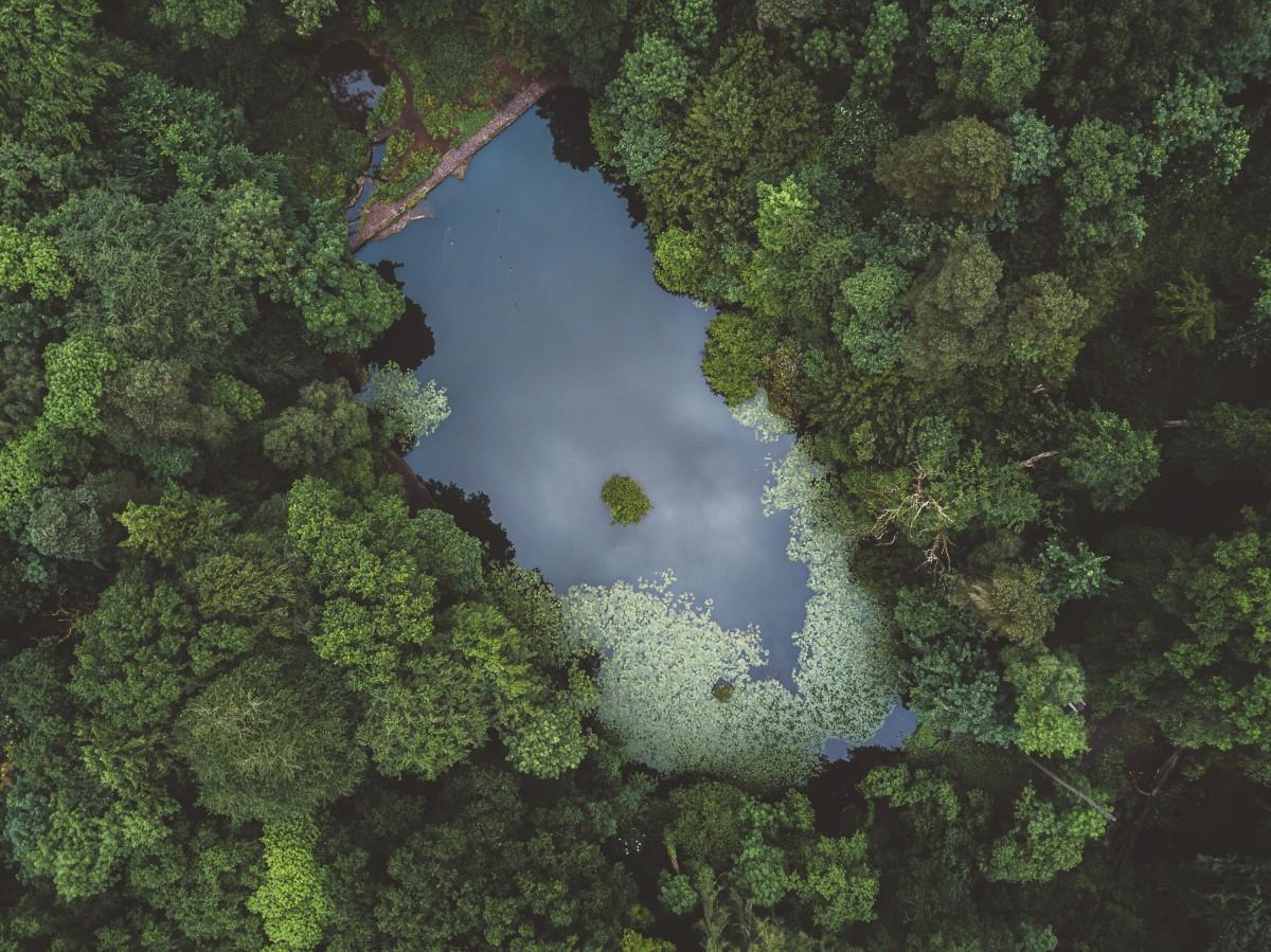 Llanura Fotos gratis : bosque,...