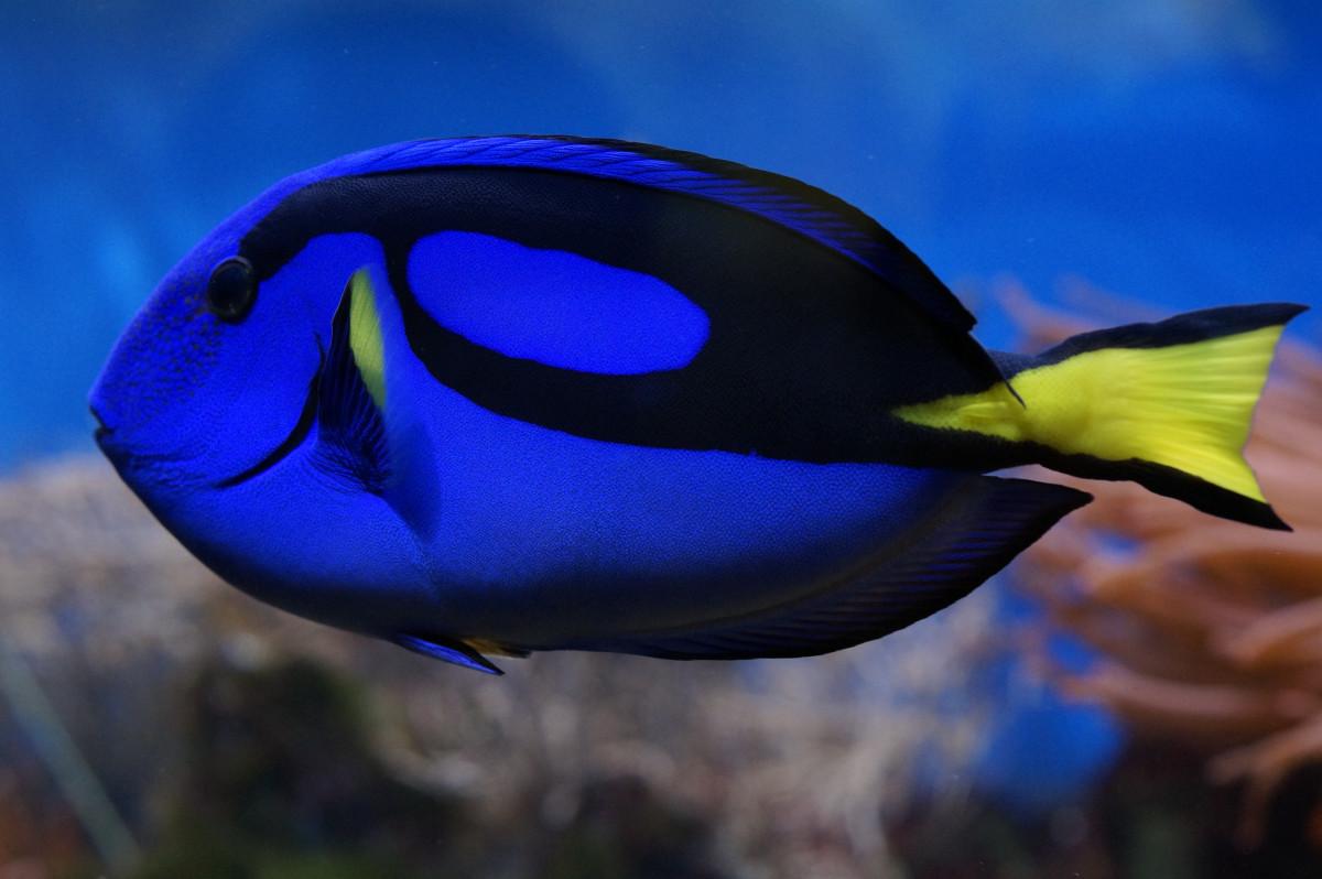 Free images sea water ocean animal diving swim - Fotos de peces tropicales ...