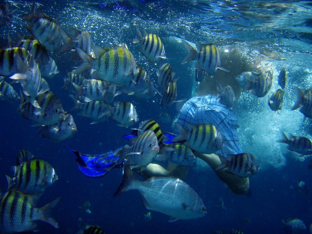 крайней картинка рыбы плавают в воде знает, может быть