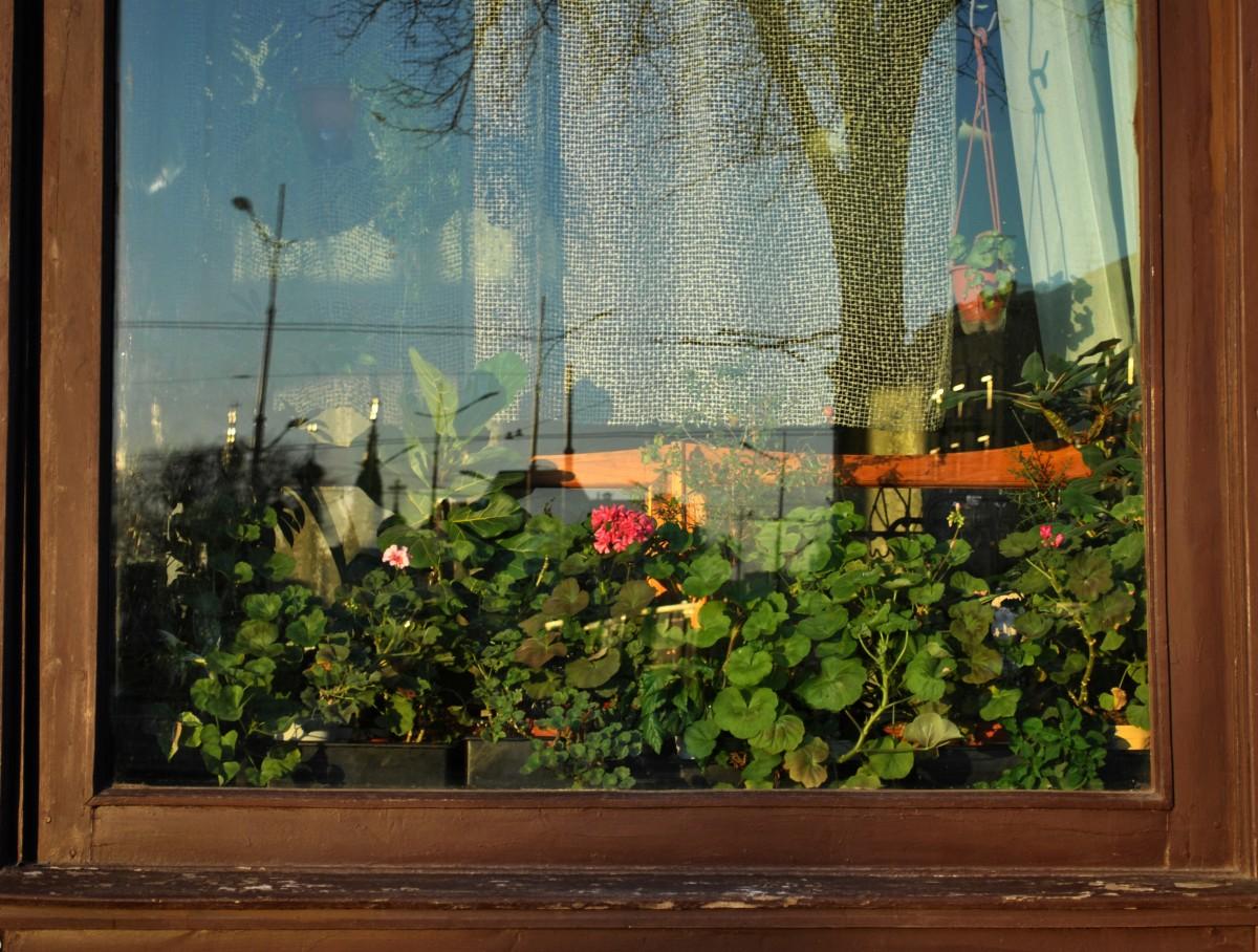 Fotos gratis flor pared verde bot nica jard n for Pintura pared verde
