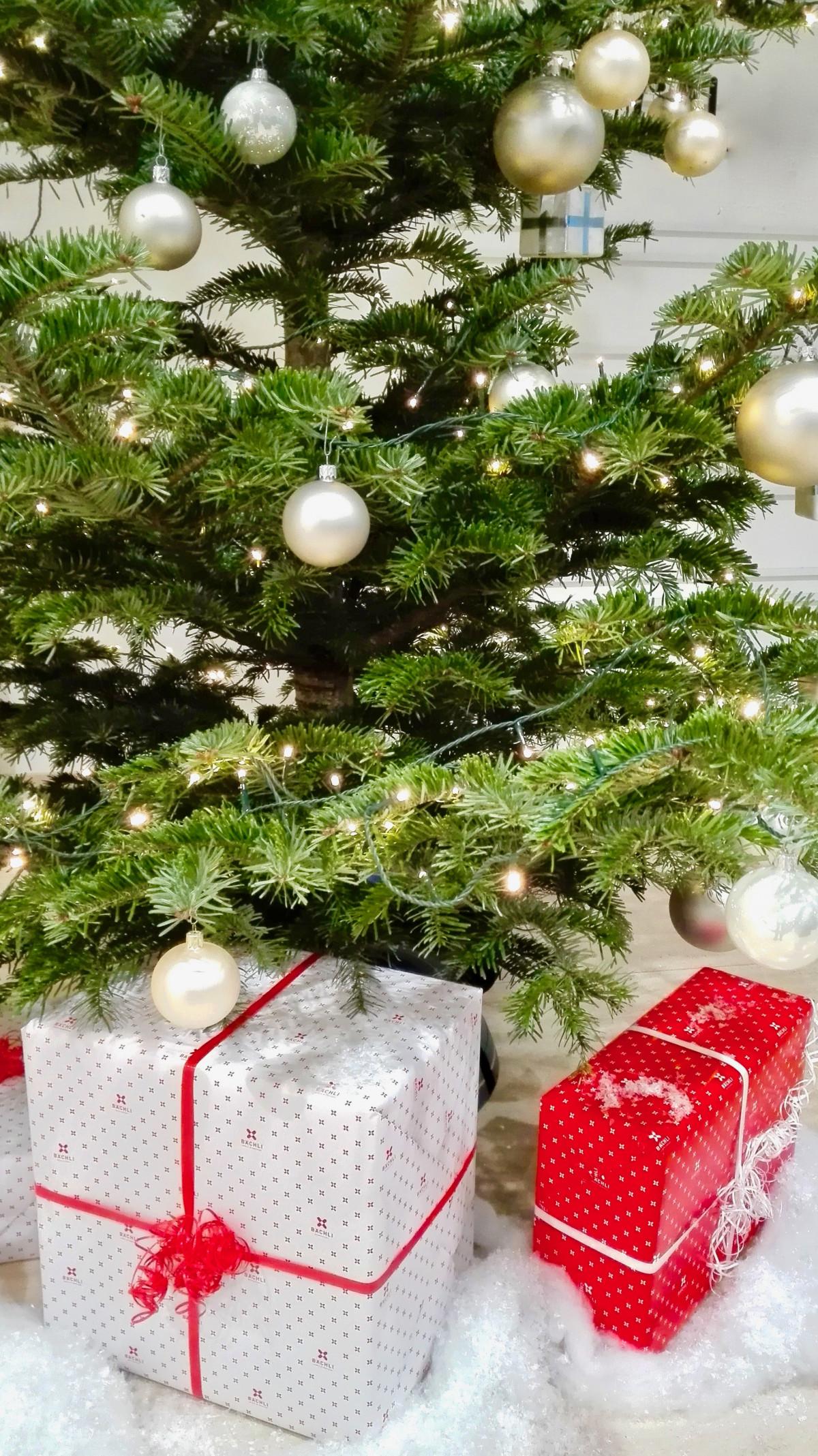 images gratuites branche fleur sapin arbre de no l av nement d coration de no l cadeaux. Black Bedroom Furniture Sets. Home Design Ideas
