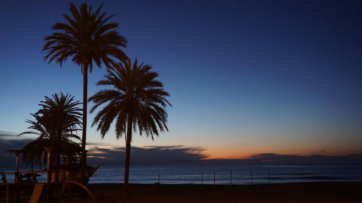 Strand hav kyst tre hav horisont himmel soloppgang solnedgang sollys morgen shore soloppgang seaside skumring kveld bukt kropp av vann Spania andalusia palmer malaga marbella arecales palm familie