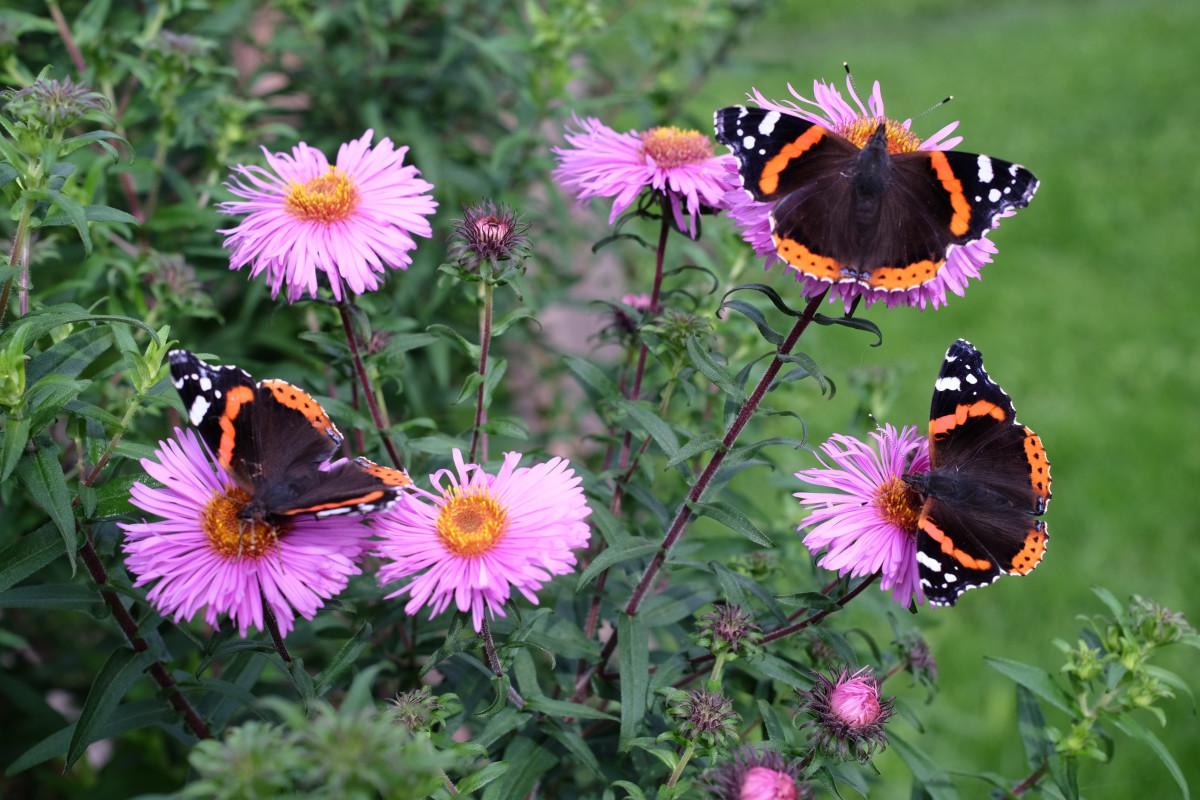 Картинка луг с цветами и насекомыми, уразой