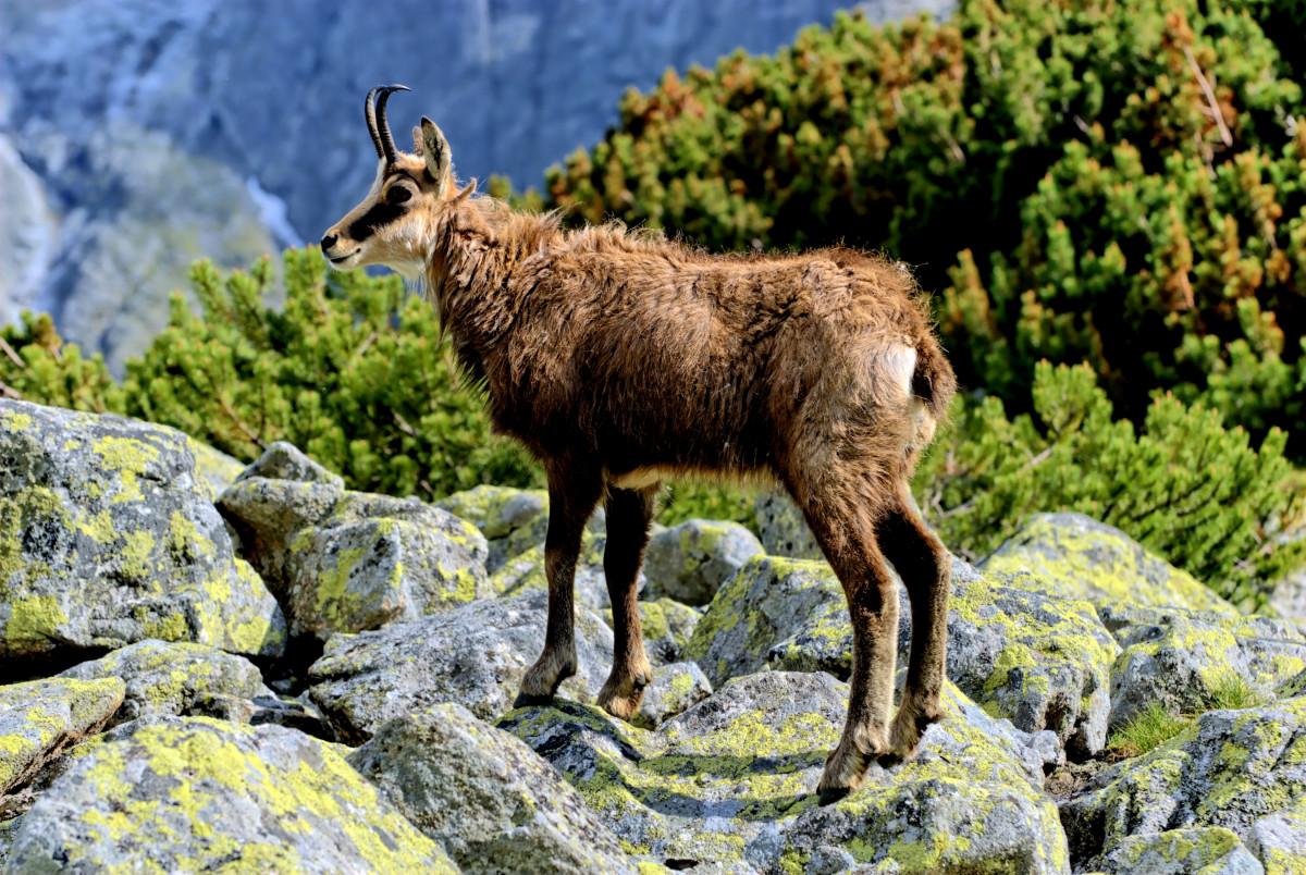Images gratuites paysage la nature montagne ciel vue - Photos de moutons gratuites ...