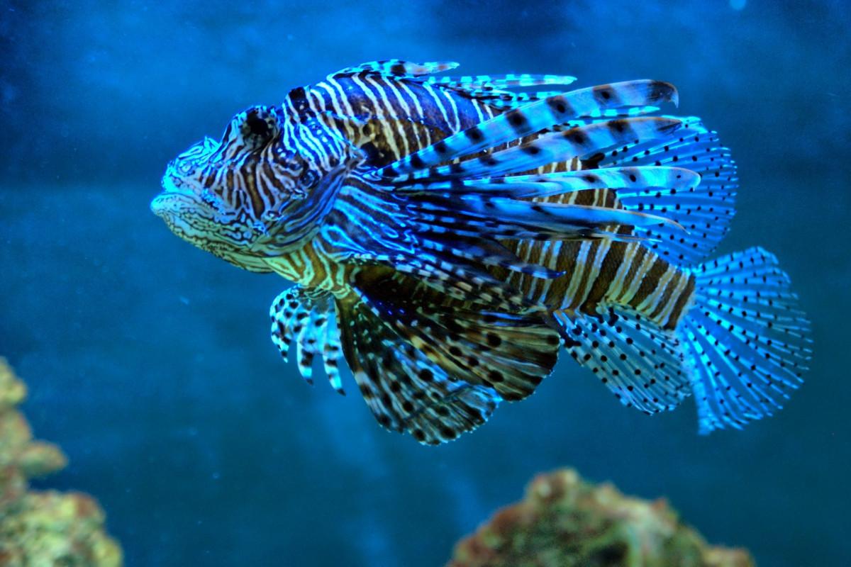 Free images underwater zoo color coral reef aquarium for Blue fish aquarium