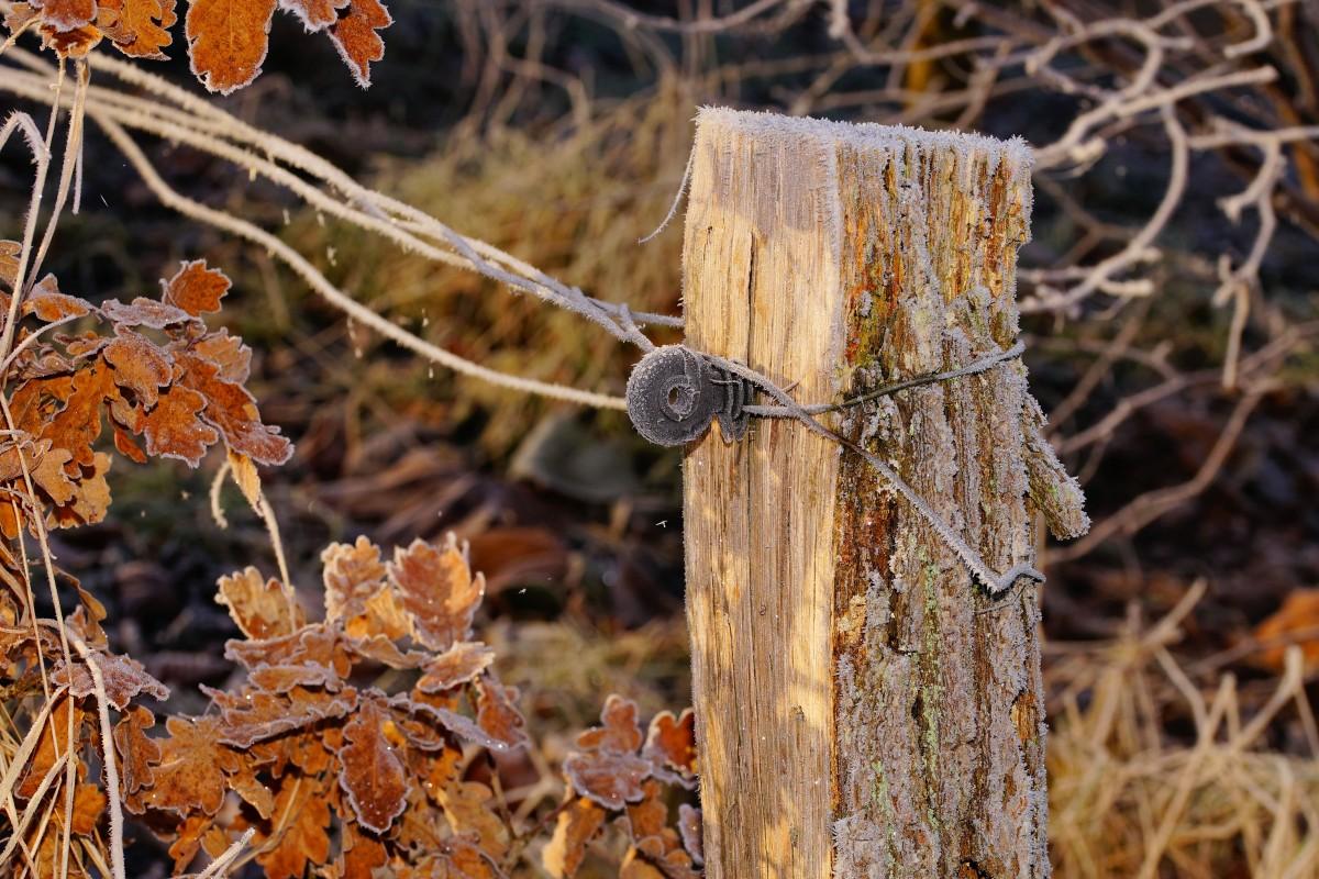 barrière jardin en bois