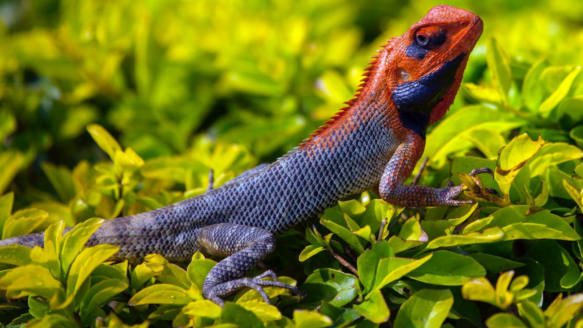 lizard reptile jungle animals animal grass scales fauna ashes scaled wildlife nature background nepal plant lacertidae iguana unsplash stocksnap domain