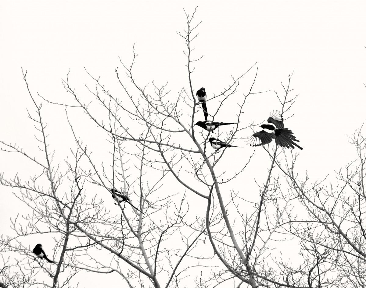 Images gratuites arbre la nature branche silhouette - Branche arbre dessin ...