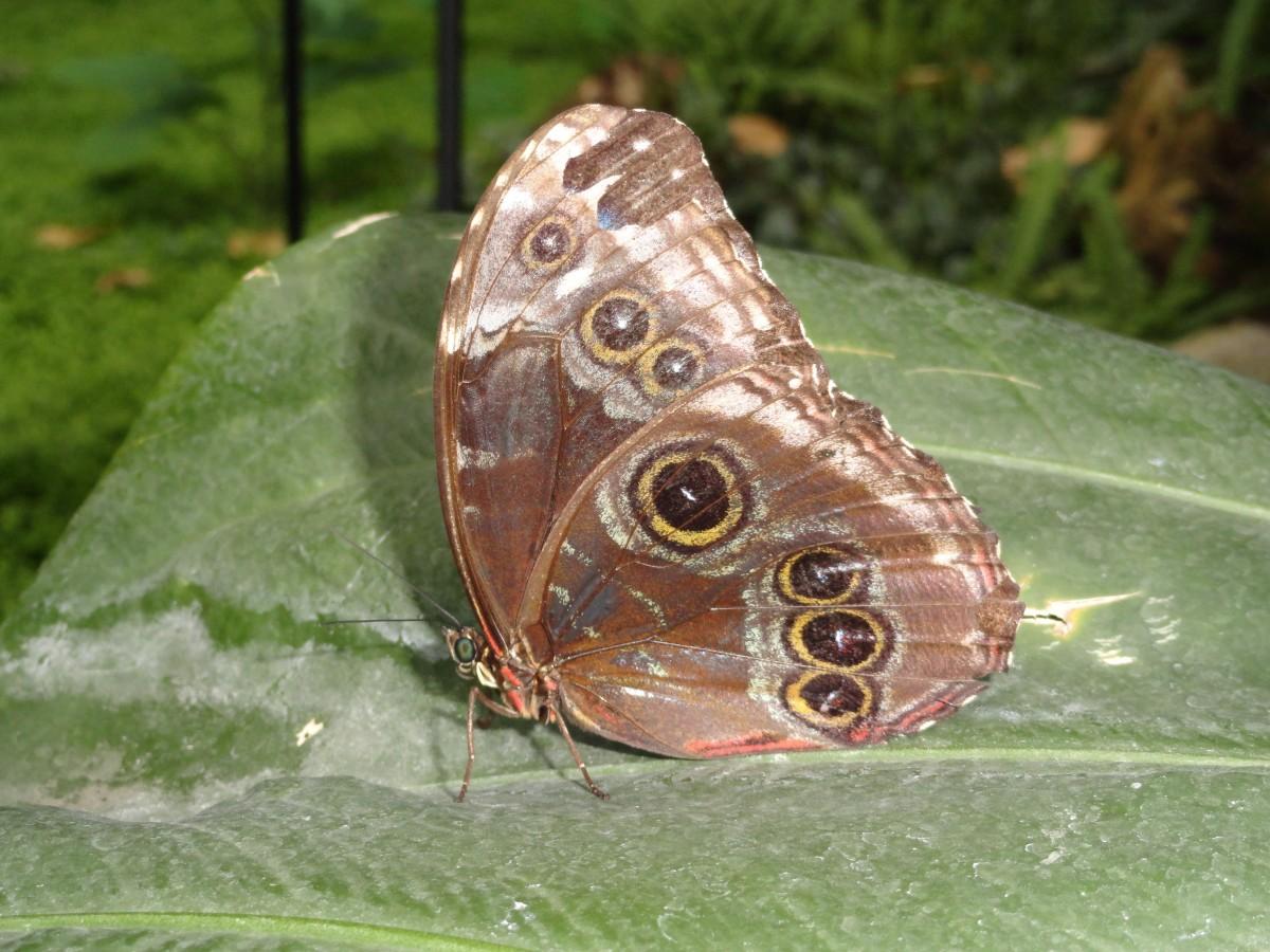 自然褐色_無料画像 : 自然, 葉, 昆虫, 褐色, 動物相, 無脊椎動物, 閉じる ...