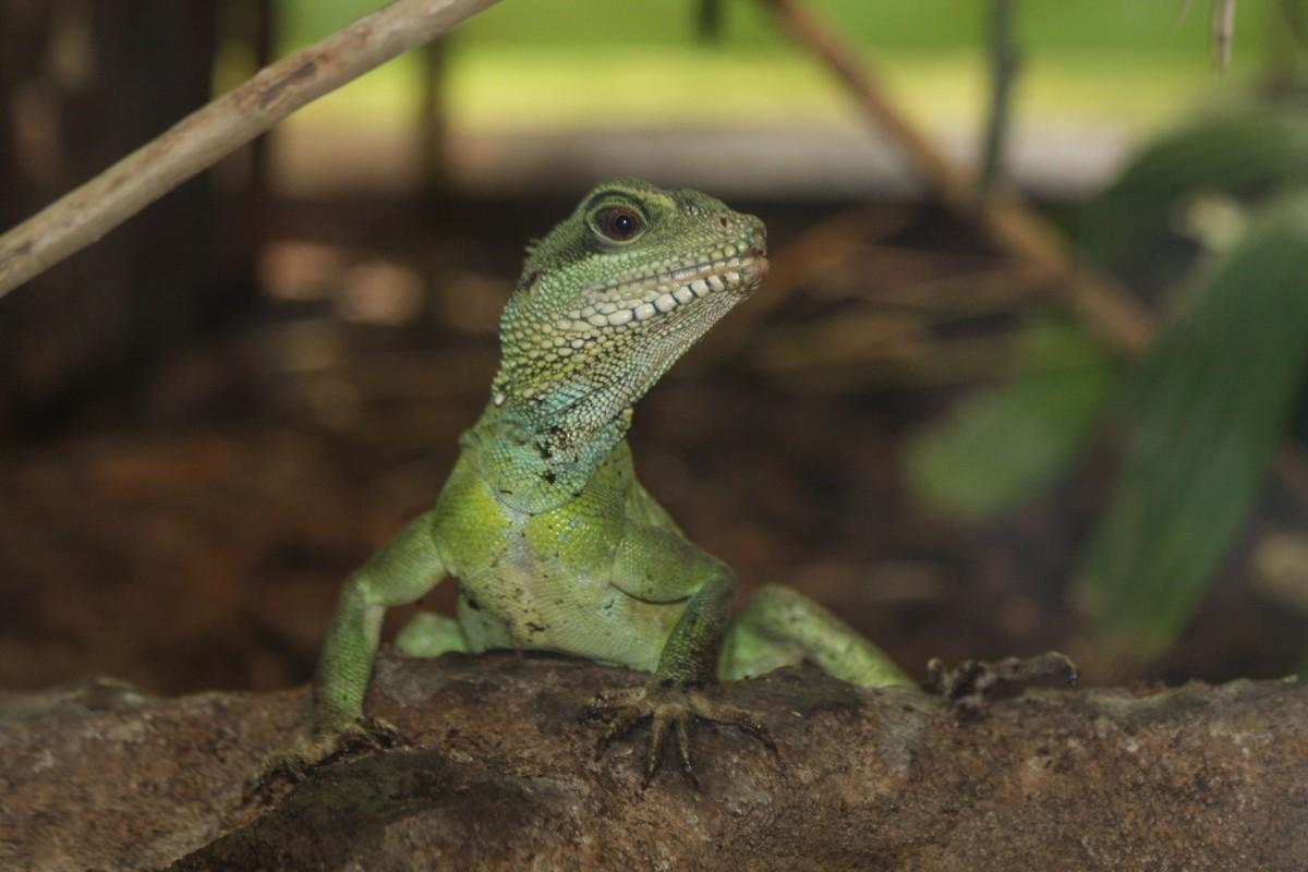 Reptiles-de-tamaño-reducido