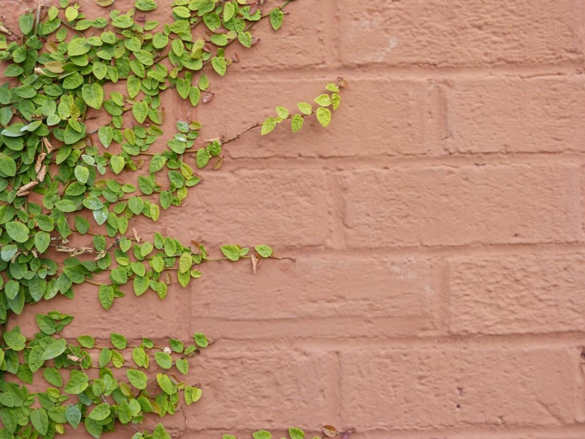 무료 이미지 : 분기, 식물, 꽃, 바닥, 녹색, 여자 이름, 흙, 이파리 ...
