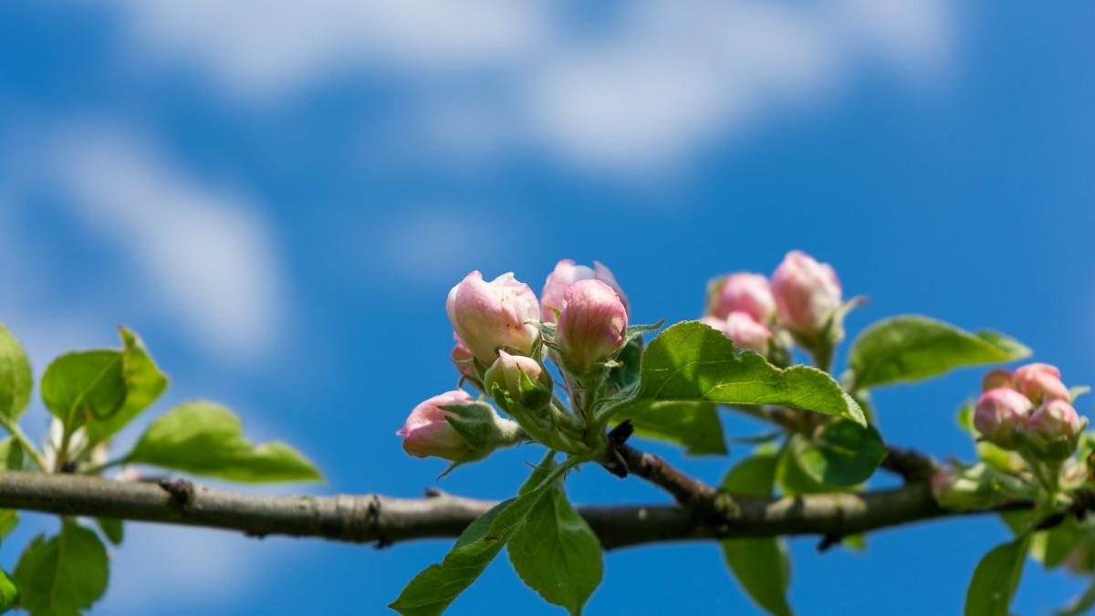 Gambar Pemandangan Pohon Alam Cabang Mekar Menanam Langit Sinar Matahari Daun Perspektif Musim Panas Mencatat Hijau Menghasilkan Botani Taman Flora Bunga Liar Bunga Bunga Merapatkan Suku Estetis Daun Daun Belukar Ranting