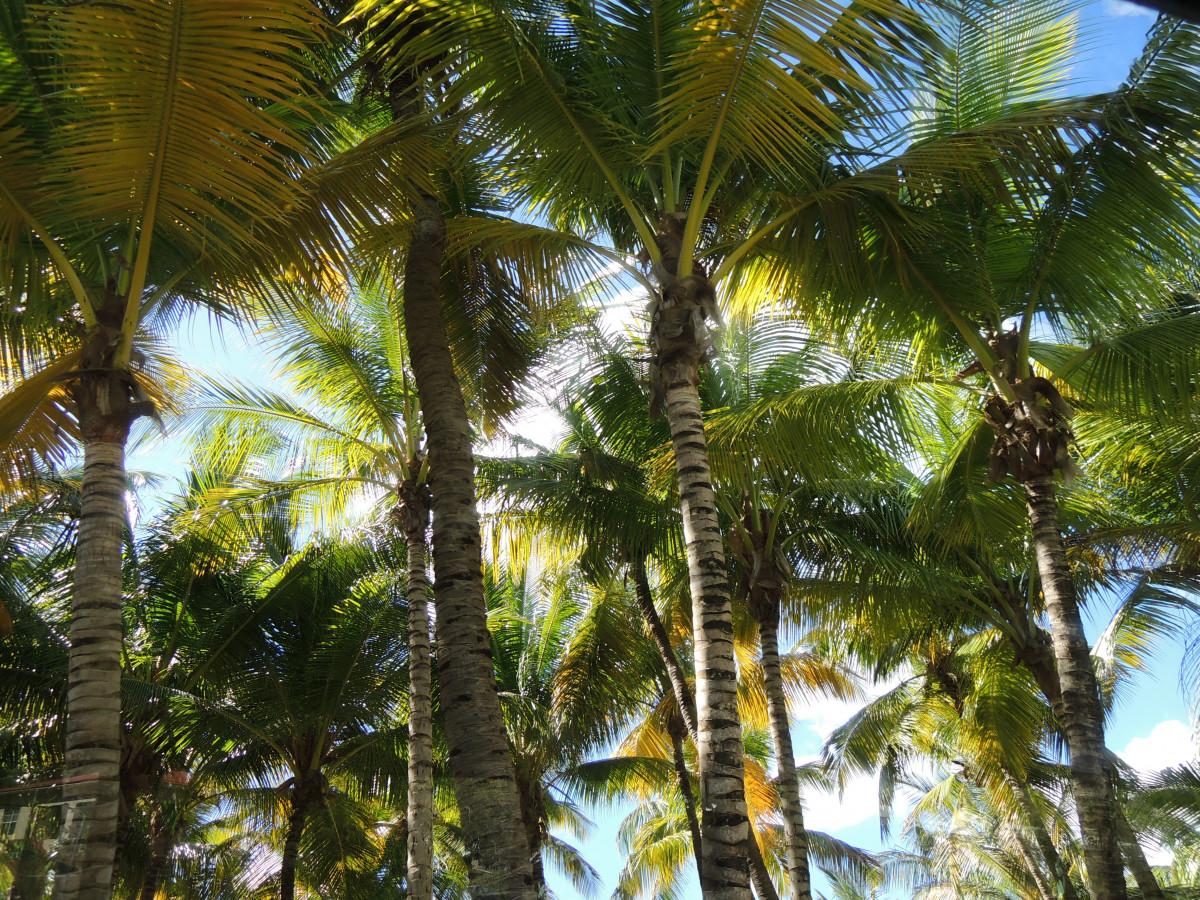 Images gratuites arbre branche plante bois fleur for Plante jungle