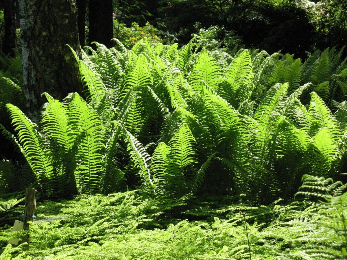 Fotos gratis rbol naturaleza flor verde selva for Carson bosque y jardin