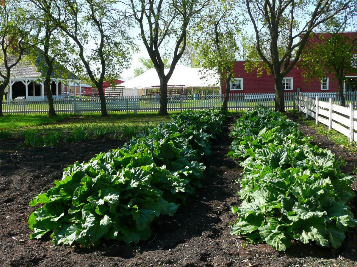 free images farm flower town produce vegetable backyard garden gardening canada. Black Bedroom Furniture Sets. Home Design Ideas