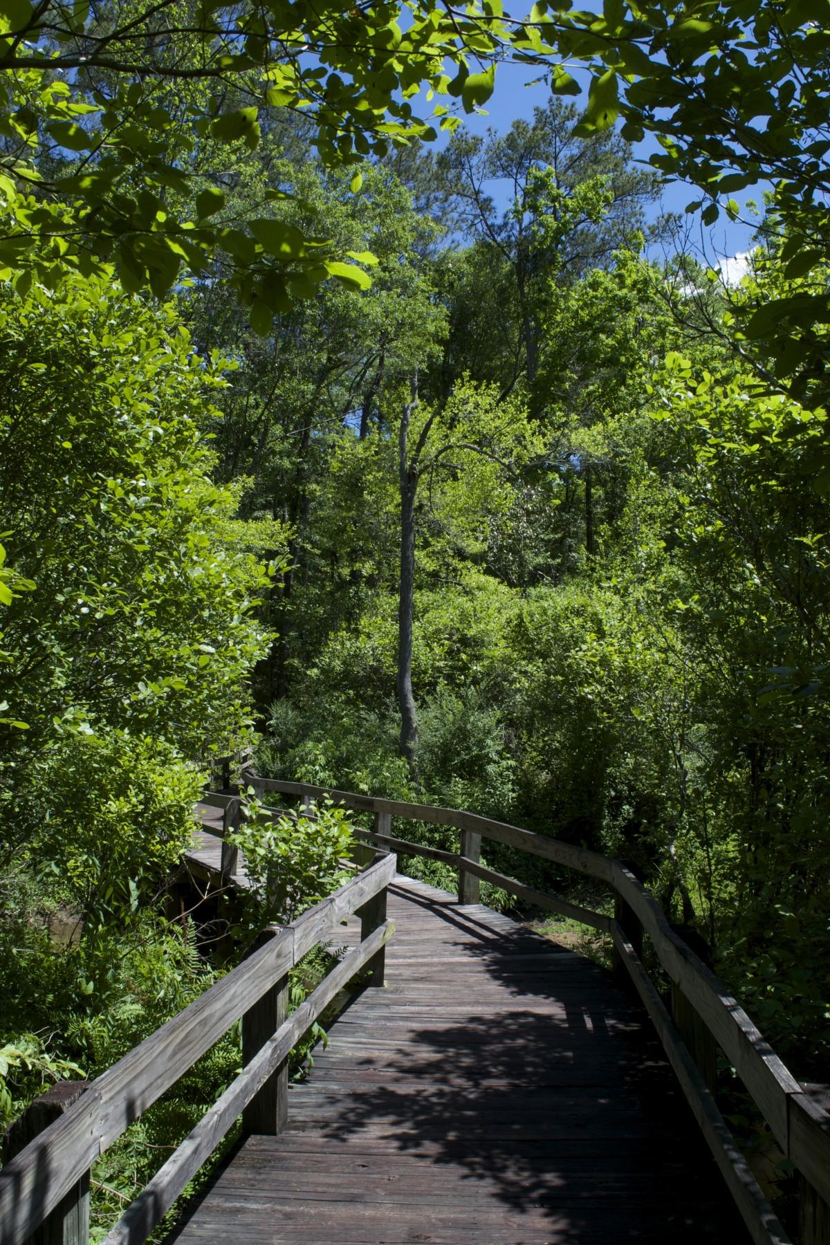 Free Images Landscape Tree Forest Plant Sky Lane