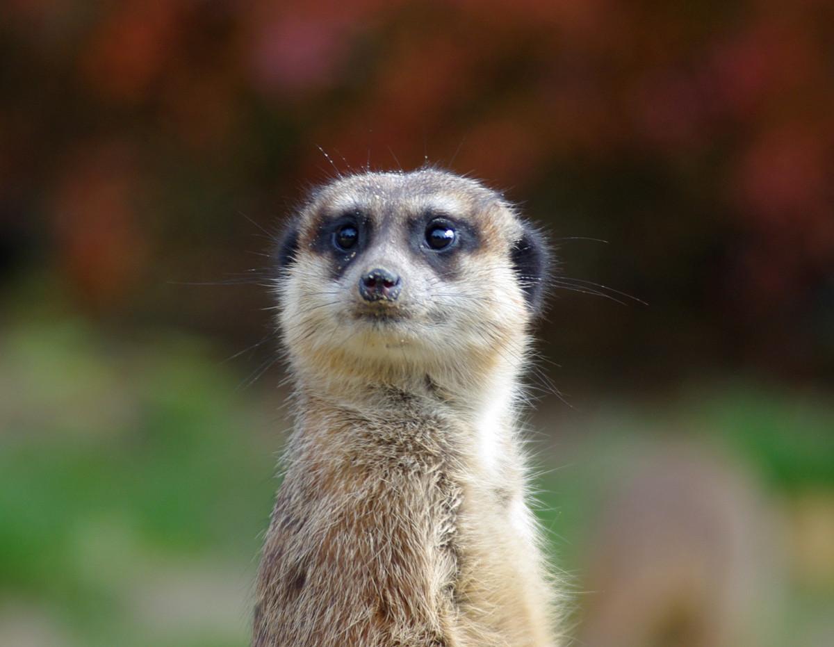 Gambar Alam Hewan Foto Margasatwa Kebun Binatang