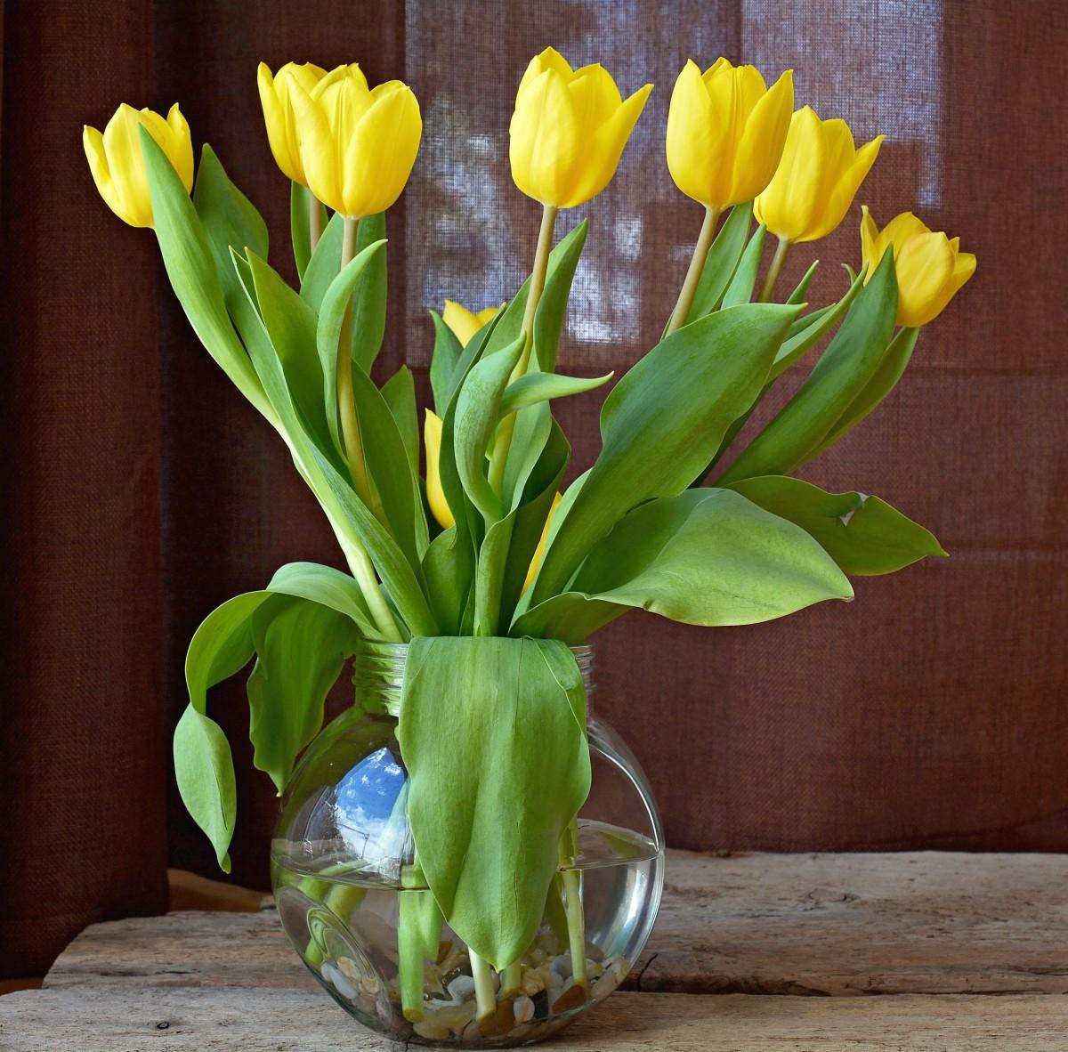 Poze Plantă Floare Lalea Vază Arc Galben Vaza De