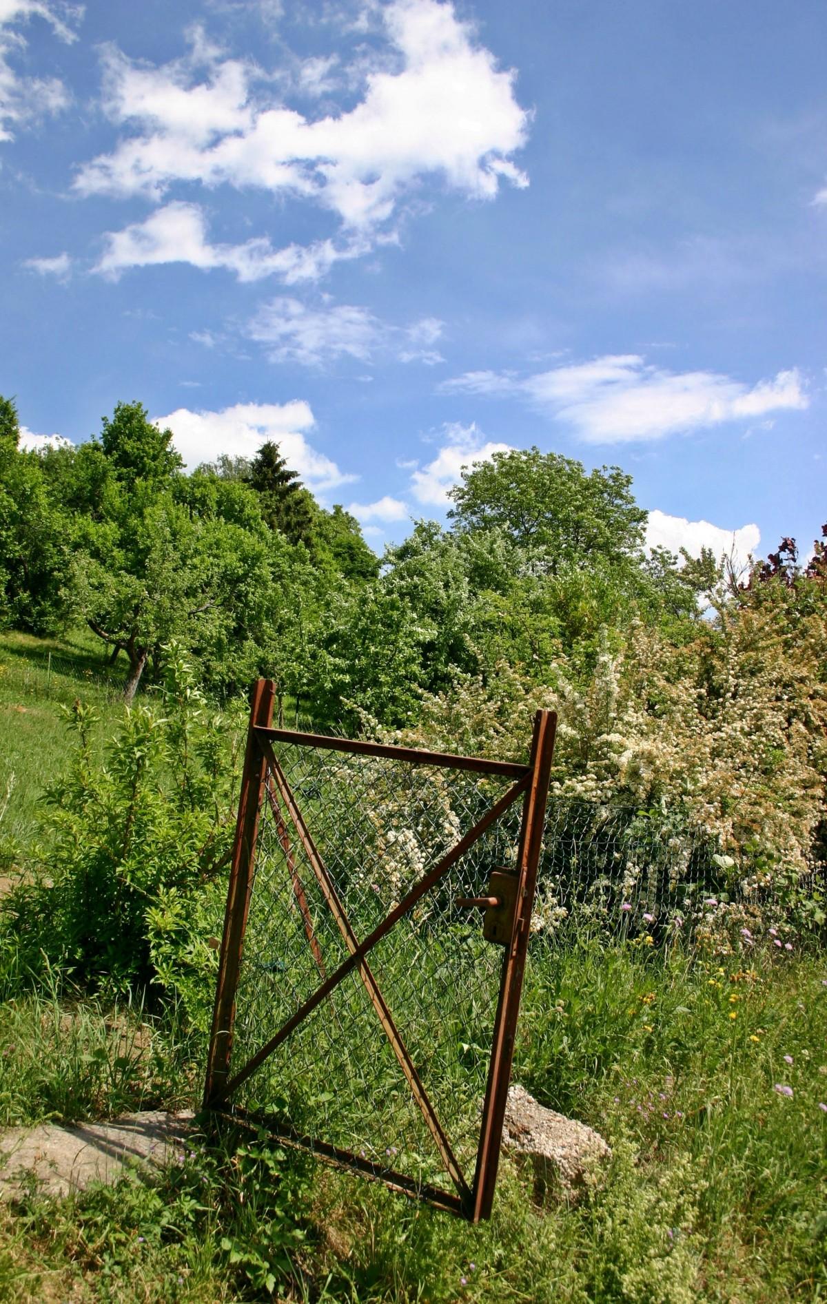 treillis pour jardin