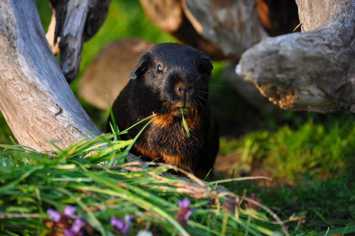 Fotos Gratis Naturaleza Perro Comer Conejillo De