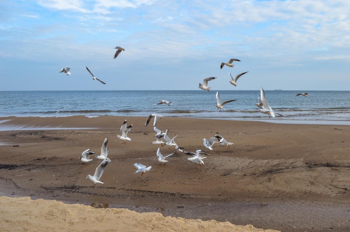 Днем мамы, картинки море чайки пляж