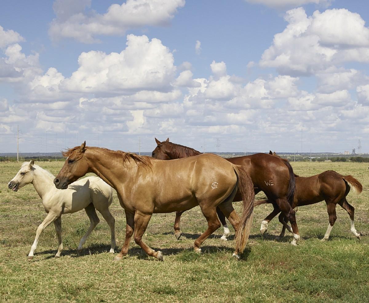 к чему сниться стадо коней своей задачей