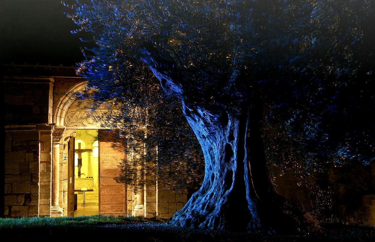 images gratuites arbre nuit lumi re du soleil fleur soir r flexion obscurit bleu. Black Bedroom Furniture Sets. Home Design Ideas
